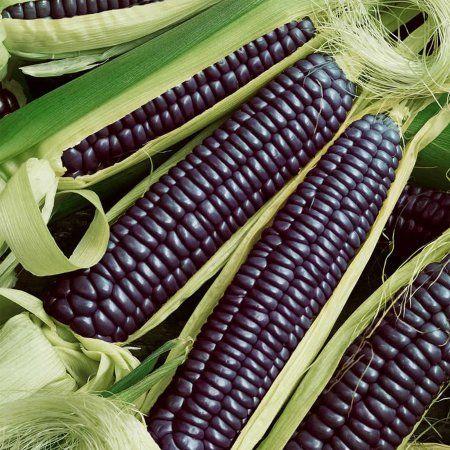 NON-GMO Unique Colour EXTRA RARE Hopi Purple Corn ~30 Top Quality Seeds