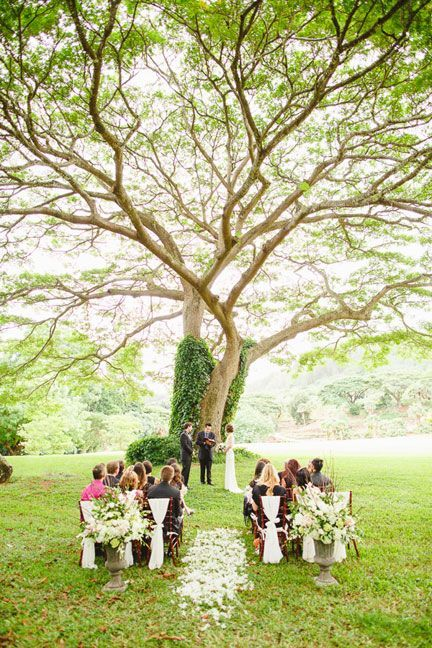The National Tropical Botanical Gardens Kauai Wedding Outdoor Wedding Ceremony Tree Over Outdoor Wedding Ceremony Small Garden Wedding Small Outdoor Wedding