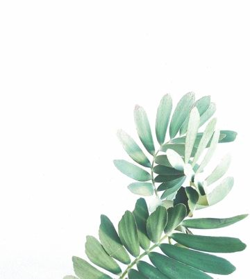 Watercolor Leaves Png Images In 2020 Plants Planting Flowers