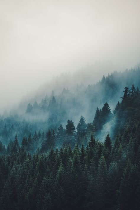 New Nature Mountains Forest Dreams Ideas Beautiful World, Beautiful Places, Landscape Photography, Nature Photography, Mountain Photography, Photography Women, Travel Photography, Misty Forest, Foggy Forest