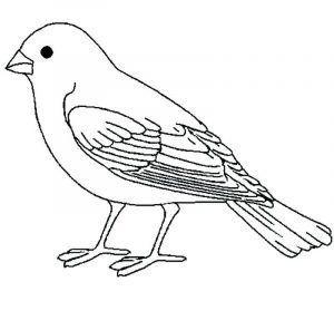 Ausmalbilder Vogel Zum Ausdrucken Ausmalbilder Vogel Ausmalbilder Ausmalen