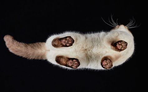Under-Cats: I Photograph Cats From Underneath