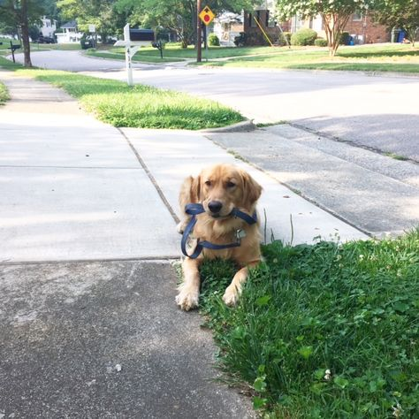 How To Exercise With Your Dog Grab The Leash And Your Walking