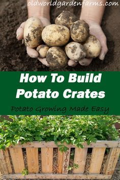 How To Build A Potato Crate Make Growing And Harvesting Potatoes