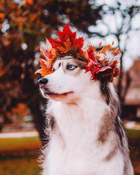 Such autumn. Much magnificent. Wow. - Imgur