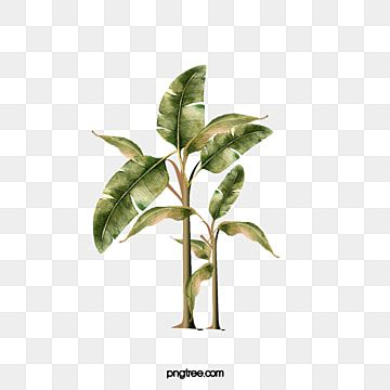 Banana Tree Banana Clipart Tree Clipart Png Transparent Clipart Image And Psd File For Free Download Banana Tree Tree Clipart Large Leaf Plants