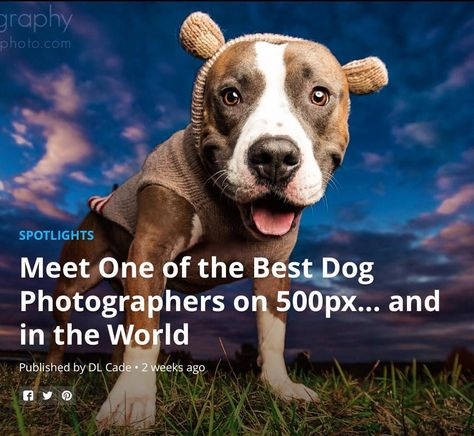 commercialdogphotographer Gahhhh!!! :) There are no...