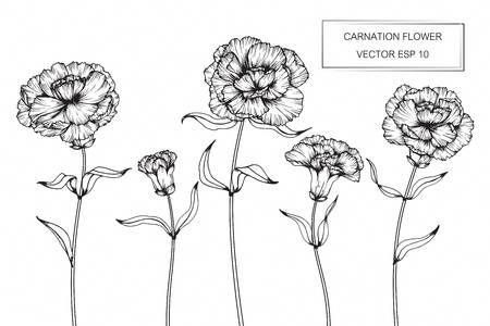 Carnation Flowers Drawing And Sketch With Line Art On White Backgrounds Flowersdrawing Flower Drawing Carnation Drawing Carnations