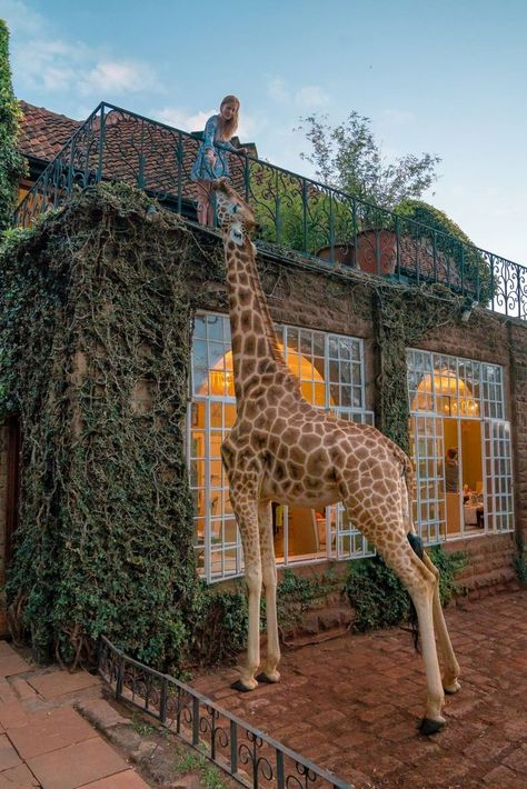 Giraffe Manor in Kenya - Is It Worth the. - Giraffe Manor in Nairobi - Cool Places To Visit, Places To Travel, Travel Destinations, Places To Go, Kenya Travel, Africa Travel, Tulum Mexico, Nairobi, Photos Voyages