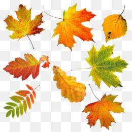 Fall Leaves Free Clip Art Cliparts Co Leaf Clipart Fall Clip Art Tree Art