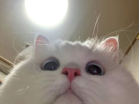 Cats Who Didn't Know You Set The Laptop to Take a Photo After 3 Incorrect Password Attempts