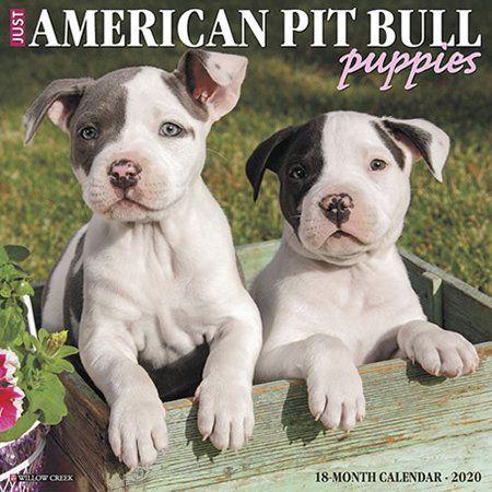 Office Supplies Bull Terrier Puppy Pitbulls Terrier Puppies