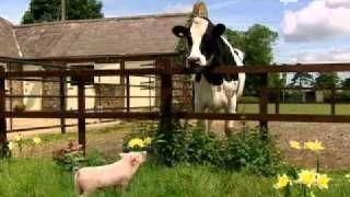 animali da fattoria - YouTube