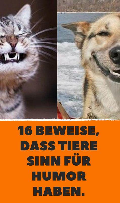 16 Beweise Dass Tiere Sinn Fur Humor Haben Tiere Humor