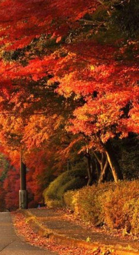 fall #BeautifulThings #Autumn #Fall...