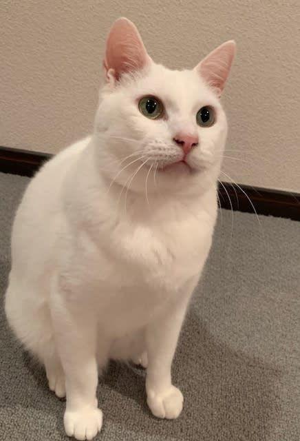 くるねこ大和 おしゃれまとめの人気アイデア Pinterest Harugakita くるねこ大和 猫 性格 ねこ