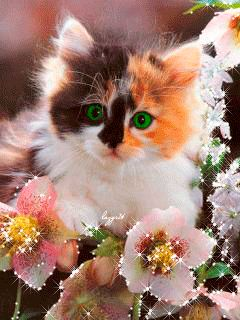 Pretty face kitty