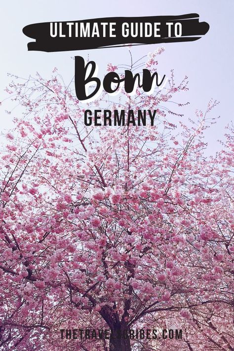 Written by a local, this is the ultimate guide to the former capital of West Germany, Bonn. A full itinerary, what to see, insider tips, when to go and so much more! #travelguide #bonn #germany #rhine #cherryblossoms #itinerary #deutschland