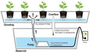 Homemade Ebb And Flow Hydroponic System Hydroponics System Aquaponics System Aquaponics