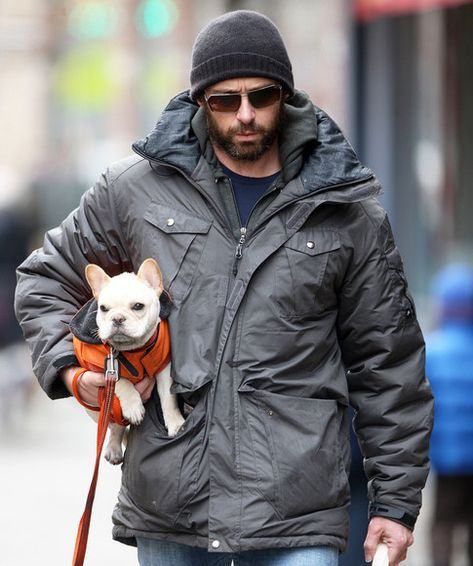 Hugh Jackman's French Bulldog, Peaches - what the heck? I was going to name MY French bulldog peaches!