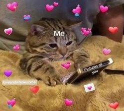 Pin By Silentwish On S O F T Cute Memes Cute Cat Memes Cute Love Memes