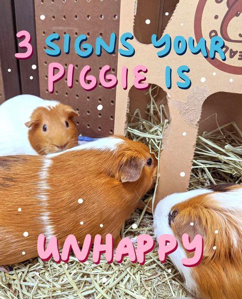 GUINEA PIG goodie bag guinea pig lover tote bag with 3 piggie pillows for your pet