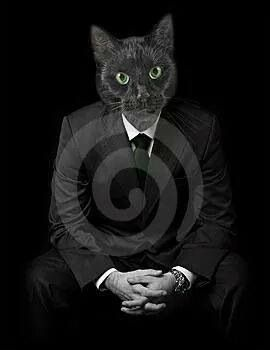 Image result for twilight zone cat