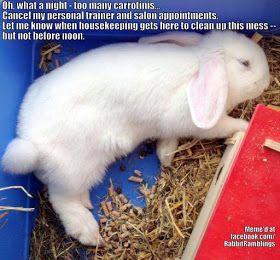 Funny Bunny Memes Funny Bunnies Bunny Meme Bunny