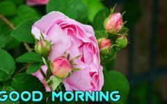 Good Morning Picture Image Download Good Morning Images Good Morning Picture Morning Pictures