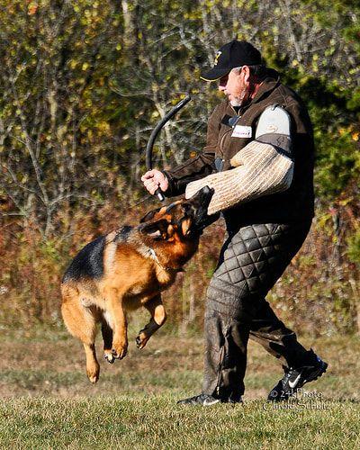 Ckc Registred German Shepherd Breeder Located In Milton Ontario
