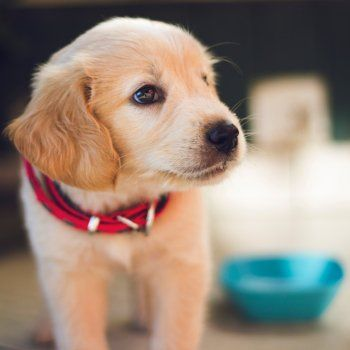 Shopping List Help Your New Dog Or Puppy Settle In Easier Dogs