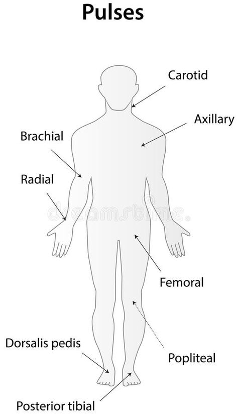 Illustration about A diagram depicting the pulses of the body. Illustration of artery, examination, femoral - 41217342 Nursing Student Tips, Nursing School Notes, Nursing Career, Nursing Students, Medical School, Student Memes, Nursing Schools, Nursing Information, Medical Anatomy