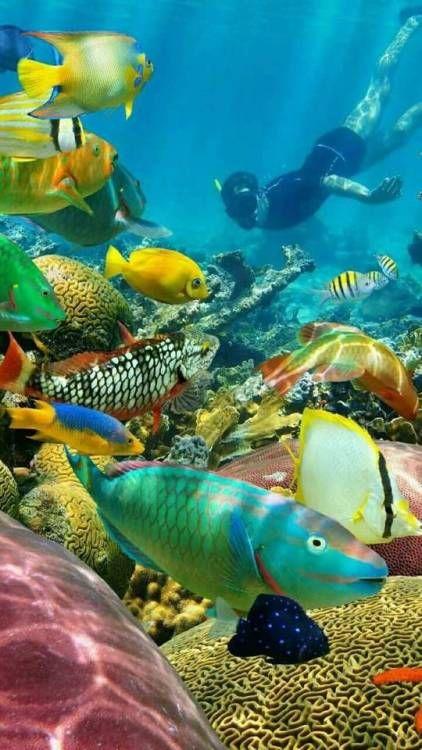 Dentro Do Mar Sem Fim Underwater Animals Beautiful Sea Creatures Sea Fish