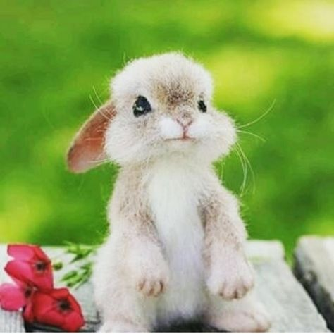Found this cute rabbit on instagram! - Did you know rabbits are one of the most neglected and abandoned domestic pet? Please read our information to find out why a rabbit is not a low-maintenance pet! #rabbit #bunny
