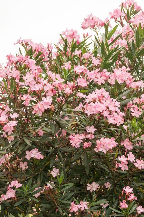 Plantes D Exterieur Sans Arrosage 15 Photos Pour Faire Votre