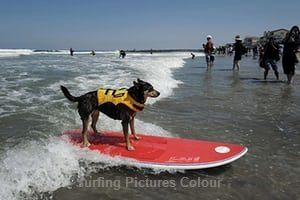 Pacifica Surf Dogs In 2020 Surfing Pictures Dog Beach Dog Competitions