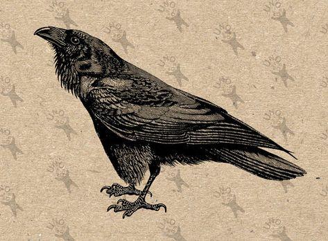 raven crow old image instant download digital unoprint etsy mixed media 3 pinterest crows ravens and digital
