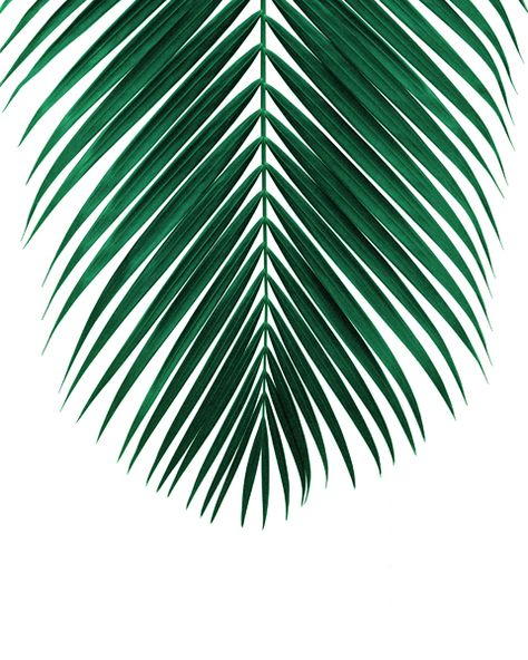 PALM LEAF • lush green Art Print by nordik