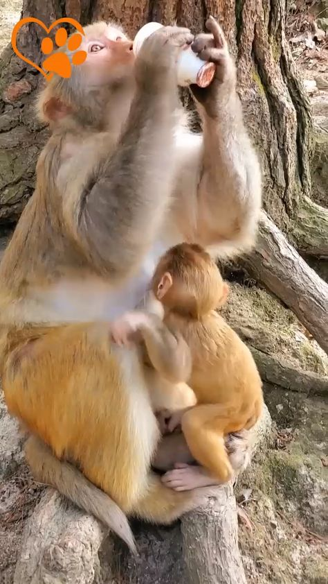 Funny Monkey Compilation 2019 - Love Animals | Part 2