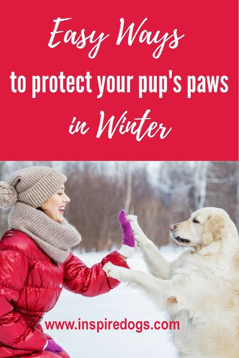 bc237fc7d The winter season can be really hard on your dog s paws. So today I thought  I d write about a couple of tips for taking care of your dog s paws in the  ...