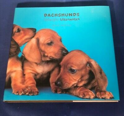 Dachshunds Lightweights Littermates By Sharon Montrose 2005