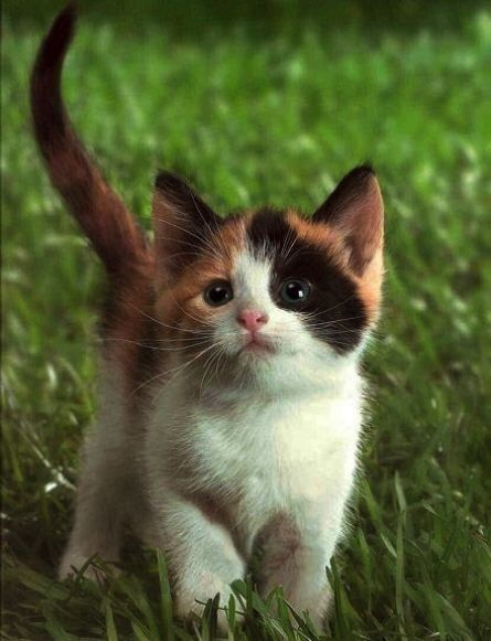 Tumblr Kittens Cutest Cute Cats And Kittens Cute Animals
