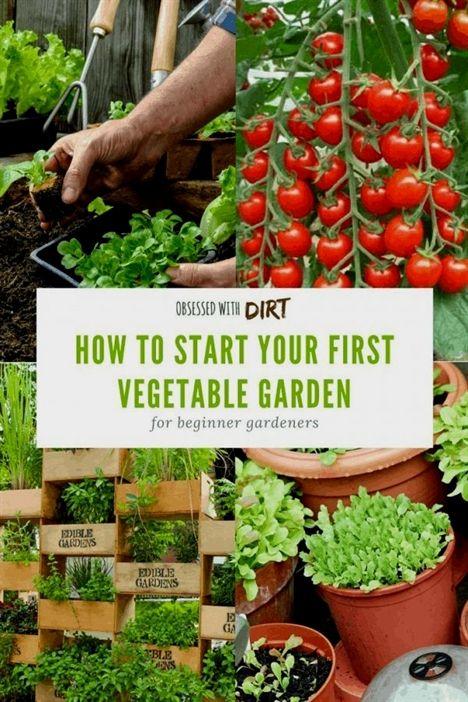 Pin On Gardening In Pots