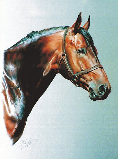 This horse was the most enormous Dutch warmblood, standing at well over 17 hands it quite took my breath away. The painting is soft pastel and painted some years ago. • Also buy this artwork on wall prints and stationery.