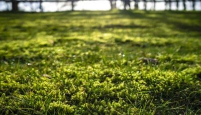 How To Get Rid Of Moss In Your Lawn Growing Grass Lawn Care Companies Remove Moss From Lawn