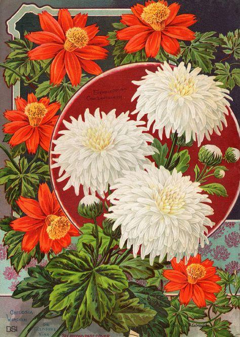 Semi Fiori Online.Vintage Flowers Retro Pop Art Style Semi Di Fiori Fiori