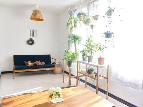 お部屋の所々に植物を 観葉植物を上手に取り入れたインテリアまとめ