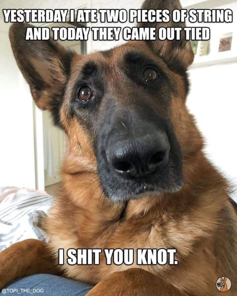 Enjoy a Batch-O-Memes to That Will Make Your Weekend Complete - Funny Gallery Dog Jokes, Funny Animal Jokes, Dog Quotes Funny, Funny Animal Videos, Guy Quotes, Funny Memes, Animal Funnies, Memes Humor, Funny Sayings