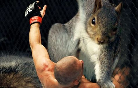 Adorably Optimistic Possum Sparks Hilarious Photoshop Battle - Adorably optimistic possum sparks hilarious photoshop battle