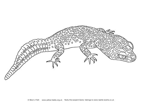 Leopard Gecko Coloring Pages Nutty The Leopard Gecko Bruce The